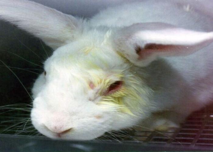 Documento rabbit 1024